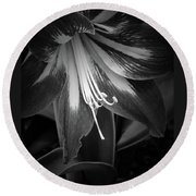 Amaryllis In Bw Round Beach Towel