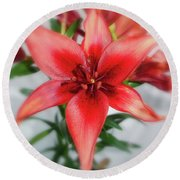 Amaryllis In Fading Round Beach Towel