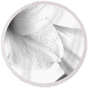 Amaryllis In White Round Beach Towel