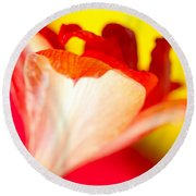 Amaryllis Shadow Abstract Flower With Shadow On Red And Yellow Round Beach Towel