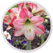 Amazing Amaryllis - Pink And White Apple Blossom Hippeastrum Hybrid Round Beach Towel