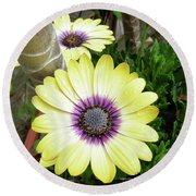 Amazing Daisy  Round Beach Towel