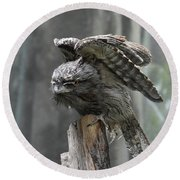 Amazing Frogmouth Bird With His Wings Extended Round Beach Towel