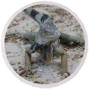 Amazing Iguana With A Striped Tail On A Beach Round Beach Towel