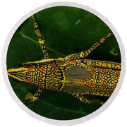 Amazing Insect Round Beach Towel
