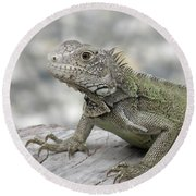 Amazing Posing Gray Iguana Perched On A Log Round Beach Towel