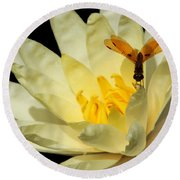 Amber Dragonfly Dancer Too Round Beach Towel