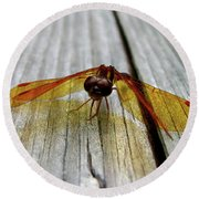 Amber Dragonfly Round Beach Towel