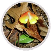 Amberina Mushroom - Tiny Jewel In The Forest Round Beach Towel