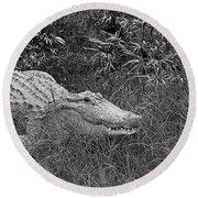 American Alligator 2 Bw Round Beach Towel