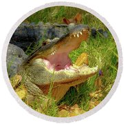 American Alligator Arizona Chapter Round Beach Towel