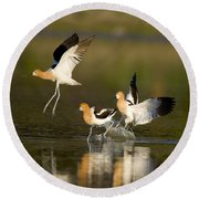 American Avocets Round Beach Towel