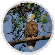 American Bald Eagle 2 Round Beach Towel