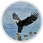 American Bald Eagle Sets Down On Fish Round Beach Towel
