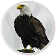 American  Bird Round Beach Towel