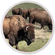 American Bison 5 Round Beach Towel by James Sage