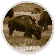 American Bison Grazing - Bw Round Beach Towel