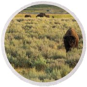 American Bison Round Beach Towel by Sebastian Musial