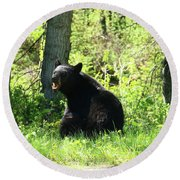 American Black Bear Round Beach Towel