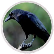 American Crow In Thought Round Beach Towel