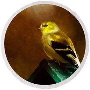 American Gold Finch In Texture Round Beach Towel
