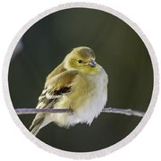 American Gold Finch Round Beach Towel