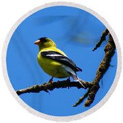 American Goldfinch 1 Round Beach Towel