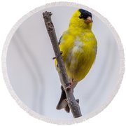 American Goldfinch Front Round Beach Towel