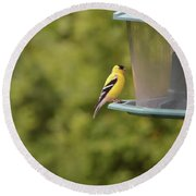American Goldfinch No Food  Round Beach Towel