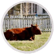 American Milking Devon In Spring Round Beach Towel