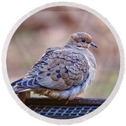 American Mourning Dove Round Beach Towel