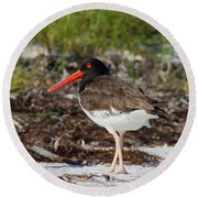 American Oyster Catcher Round Beach Towel