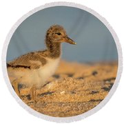 American Oystercatcher Chick Round Beach Towel