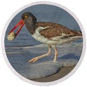 American Oystercatcher Grabs Breakfast Round Beach Towel by Susan Candelario