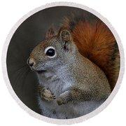 American Red Squirrel Portrait Round Beach Towel