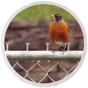 American Robin  In Spring          March            Indiana Round Beach Towel