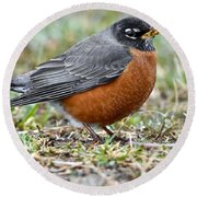 American Robin With Muddy Beak Round Beach Towel