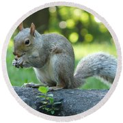 American Squirrel Round Beach Towel