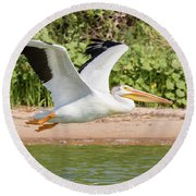 American White Pelican Above The Water Round Beach Towel