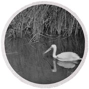 American White Pelican Among Reeds         Minnesota Zoo          Autumn Round Beach Towel