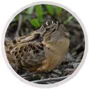 American Woodcock At Rest Round Beach Towel