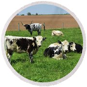 Amish Farm With Spotted Cows And Cattle In A Field Round Beach Towel