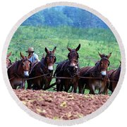 Amish Plowing The Fields With Mules Round Beach Towel
