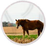 Amish Work Horse Round Beach Towel