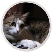 Ammani The Cat Round Beach Towel
