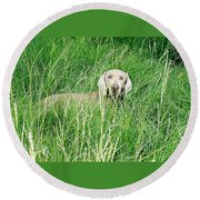 Among The Grasses Round Beach Towel