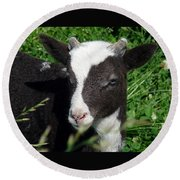 Amy's Lamb Round Beach Towel