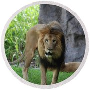 An Amazing Look At A Prowling Lion Standing In Grass Round Beach Towel