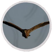 An American Bittern Comes Flying In. Round Beach Towel