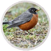 An American Robin With Muddy Beak Round Beach Towel